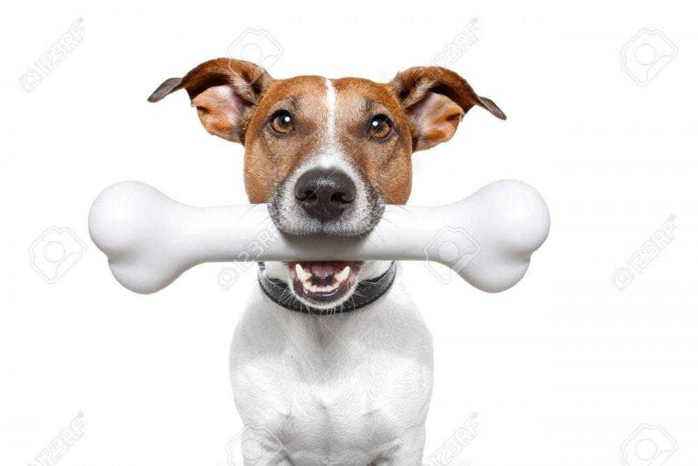 13005628-dog-with-a-bone-in-mouth.thumb.jpg.2166fd7e18b640fbb01f92e58fae65da.jpg